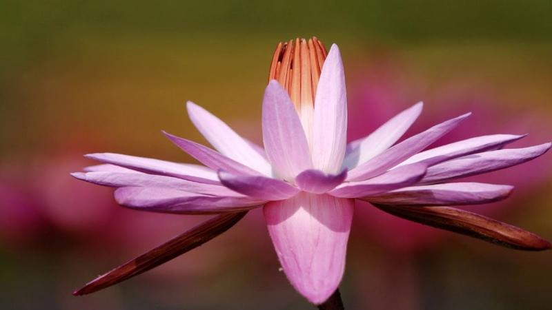 Прекрасные цветы. Secret Garden «The Promise»