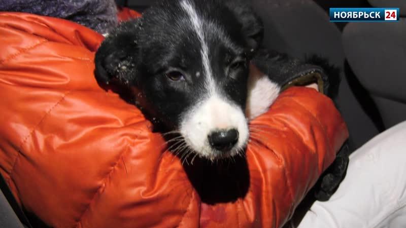 В Ноябрьске спасли застрявшего между бетонными плитами щенка