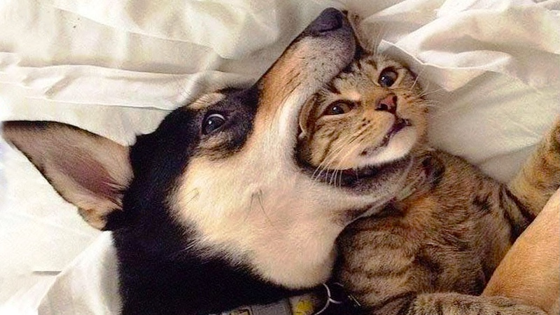 😍 Awesome Cats and Dogs - Funny Videos (2018) ❤️ - Awesome Animals