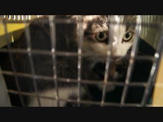 Решение проблемы бездомных животных: «Отлов-стерилизация-возврат». ЧАСТЬ 2