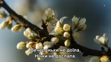 Цвiте терен - Таисия Повалий, Александр Михайлов и Наташа Королёва (Subtitles)