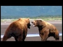 Sgt Brown vs Mickey bear fight rattles Treadwell