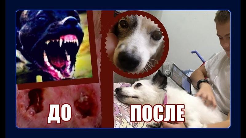 Растерзанная питбулем: Одри умирала дважды/Excruciated by pit bull terrier