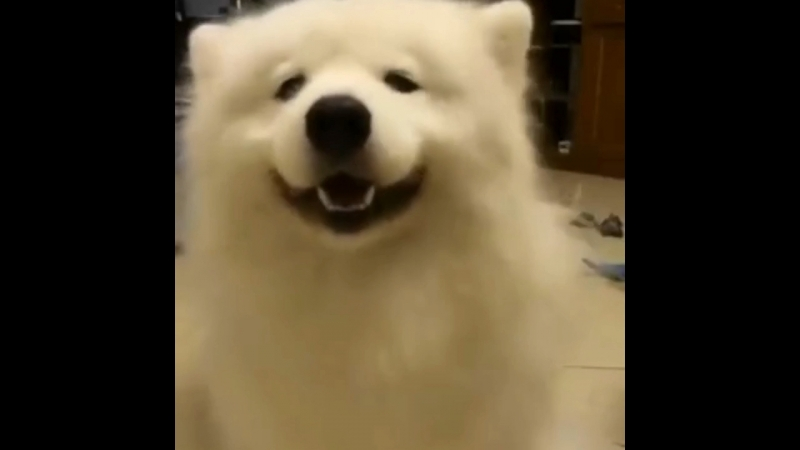 Собакен 3