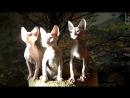 Три богатыря котята донского сфинкса