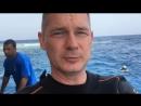 Сафари на Юг Красного моря 2018
