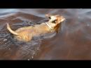Вот так Никулишна около меня плавала всё время пока я была в воде
