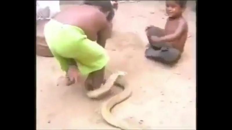 Bomba кобра индия дети