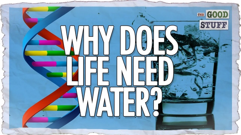 The Amazing Properties of Water! (That Make Life Possible)