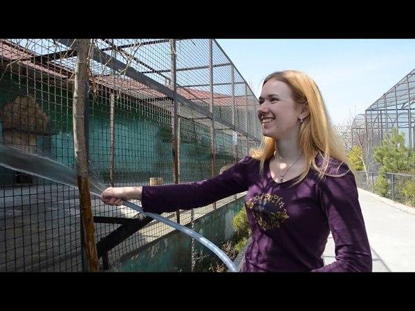 МЕДВЕДЬ ФИМА ВЫШЕЛ В ВОЛЬЕР ПОСЛЕ ОПЕРАЦИИ ! Тайган .Крым.