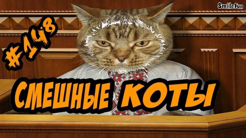 Приколы с Котами ДО СЛЁЗ Смешные Кошки и Коты 2018