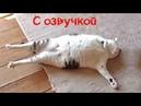 СМЕШНЫЕ КОТЫ С ОЗВУЧКОЙ – Лютые приколы с котами и кошками Смешные кошки, видео мемы 2019