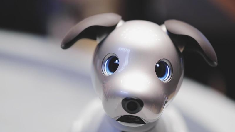 Sony Aibo AI