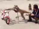 обезьяна в деле💪