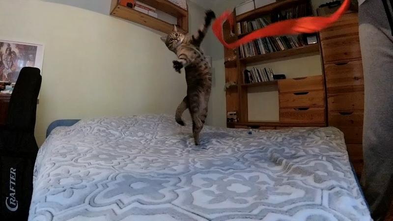Slow motion cat - Котейка в слоумоушен 2