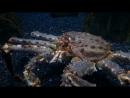 Смотря на Камчатского краба, предположения туристов были не логичны