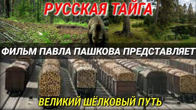 Русская тайга и Азиатская пила