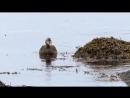 Дикая природа Скандинавии. 4. Исландия _ Iceland.1080p