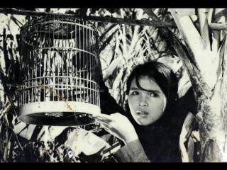 Con chim vành khuyên - Van Thong Nguyen & Vu Tran (1962)