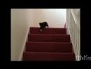 Смешное видео про животных. Животные на лестнице.