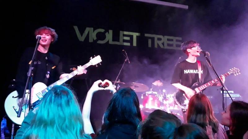 Violet Tree in Dnipro ( Ukraine 🇺🇦🇰🇷) 18.09.24