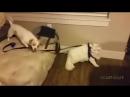собаки VS кошки 1