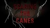 Джастин Уильямс пугает партнеров по «Каролине»