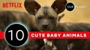 Cutest Baby Animals From Our Planet 🐾 Netflix