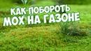 Мох на газоне 🌱 Как избавится ✔️ Сад огород