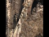 Самый высокий собор La Sagrada Familia in Barcelona Spain