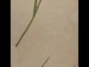 Даня Дунай Арт картина ирисы 100х100