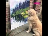 Собака медитирует перед картиной