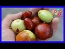 Descubre las Increíbles Propiedades de la Fruta de la Inmortalidad