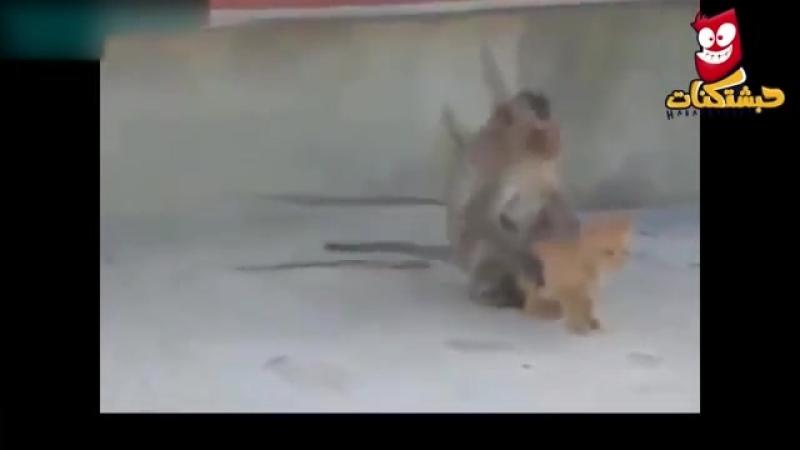 تحدى قرود vs قطط وكلاب - اضحك من قلبك على القرود المجنونة والقطط والكلاب.mp4