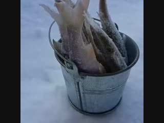 Ведро рыбы