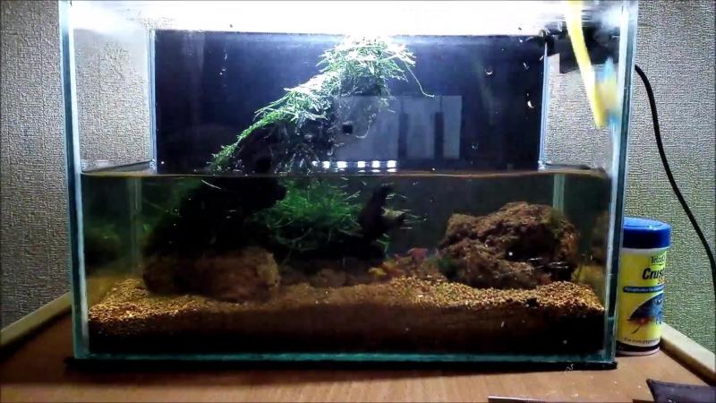 Чистка аквариума 10 литров. Креветочник. Стрижка мха
