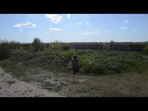 Лев Олежка пришел к памятнику ЛОРДА Тайган .Крым