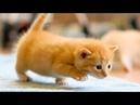 Кому милоты 🐈 - Смешные Коты и Котята - 🐱 Самые милые котики!