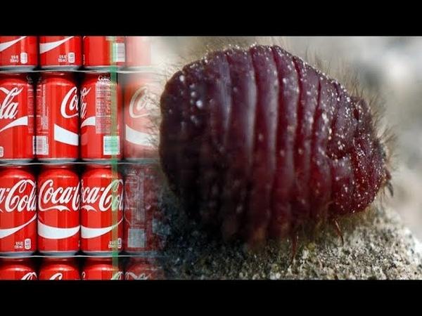 Из чего на самом деле делают популярный напиток Coca cola? Информация не для слабонервных