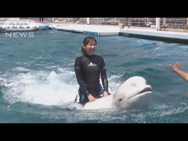 乗って良し!抱きついて良し!イルカと遊べて大人気(18/05/31)