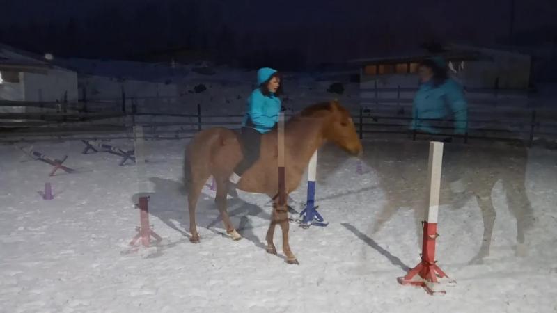 Работа на свободе с лошадью. Оля и Жура.
