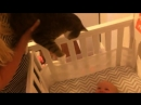 Baby meeting cat for the first time
