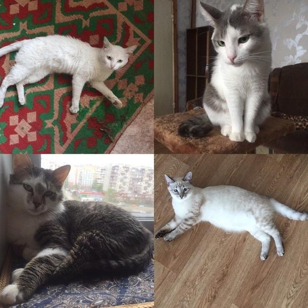 #нужна_финансовая_помощь@vmestepnz_animals #Кошкин_дом_ID91