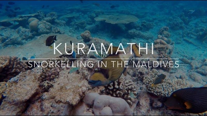 Snorkelling in The Maldives - Kuramathi - 2015