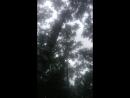 Деревья в небесах