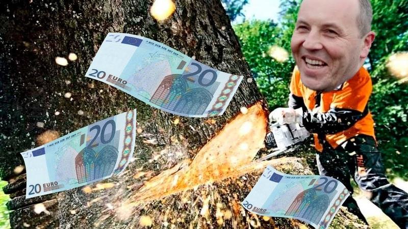 Лес рубят — евро летят в карманы