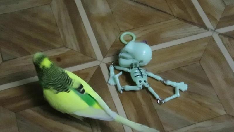На бесптичье и попугайчик - некрофил. Других попугаЁв у меня для вас нет...