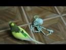 На бесптичье и попугайчик некрофил Других попугаЁв у меня для вас нет