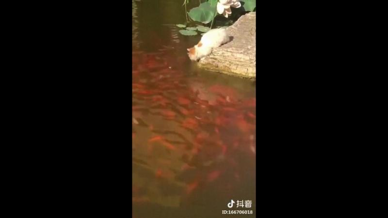 Похлопаем этому рыбаку