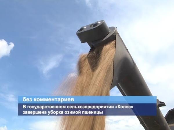 ГТРК ЛНР. В государственном сельхозпредприятии «Колос» завершена уборка озимой пшеницы